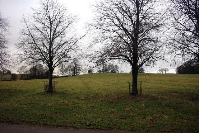 Ridge and furrow field on Tissington Estate
