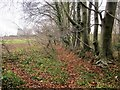 SE4626 : Beeches, Fryston Park by Derek Harper