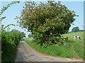 ST7270 : Hall Lane near Lower Hamswell by Stephen Richards