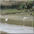 SX4153 : Little Egret and seagull in flight by Rob Farrow