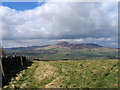 NS9930 : Grassy hillside at 'The Nips' by Trevor Littlewood