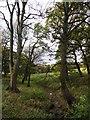 NZ2947 : Trees along Bow Burn by Robert Graham