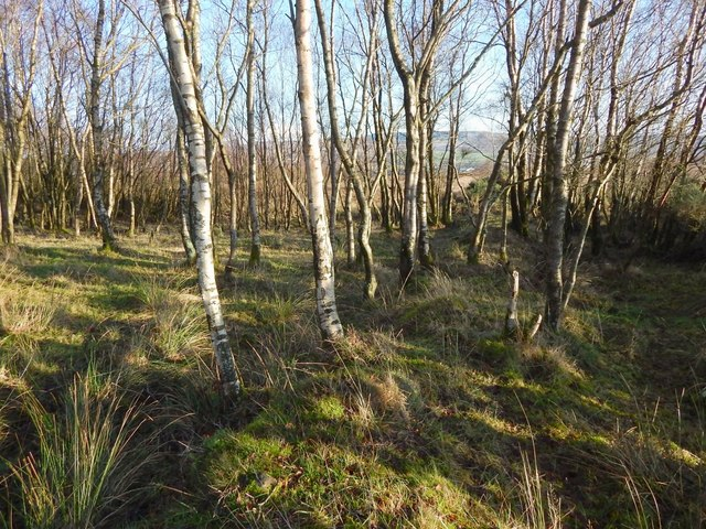Woods beside path