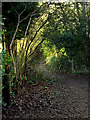 TM2648 : Footpath to Sandy Lane by Adrian Cable