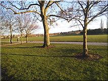 TQ2472 : Wimbledon Park by David Howard