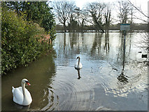 SU8083 : Where Medmenham Ferry once was by Robin Webster