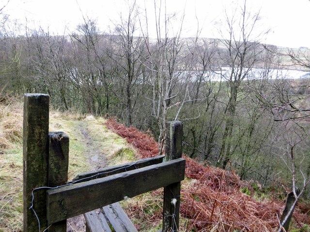 Path through Hill Top Wood