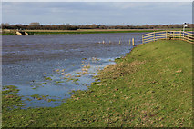 SK8166 : River Trent in spate by Richard Croft