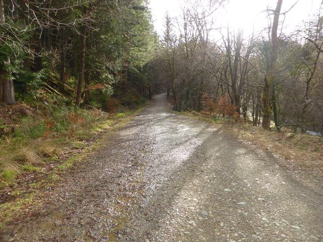 Forestry road beside the Afon Mawddach