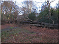 TL4400 : Fallen tree blocks ride by Roger Jones