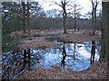 TQ4399 : Waterlogged forest by Roger Jones