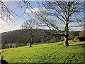 SX8754 : Pasture near Greenway by Derek Harper