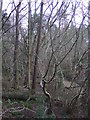 NZ6317 : Ellers Wood by JThomas