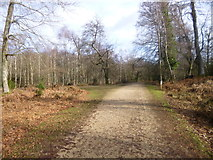 SU2609 : Acres Down, track junction by Mike Faherty
