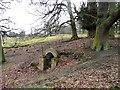 SJ7480 : Structure in Moss Plantation, Tatton Park by Christine Johnstone