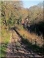 SX8855 : Greenway Halt by Derek Harper