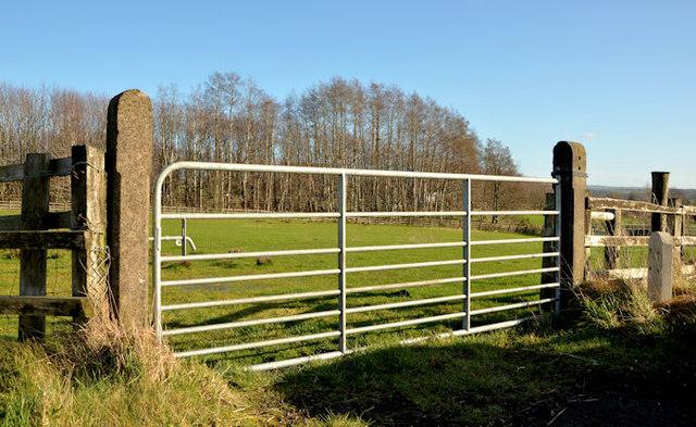 Field gate near Templepatrick