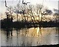 TQ0766 : The Thames at Shepperton, February 7th 2014 (1) by Stefan Czapski