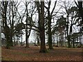 SJ7482 : Red deer, western Saddleback Plantation, Tatton Park by Christine Johnstone