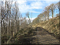 SE5084 : Forestry road in South Woods by Trevor Littlewood