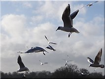 TQ2780 : London: birds hover over givers of bread by Chris Downer
