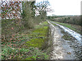 TM2991 : Moss-covered Banham's Lane by Evelyn Simak