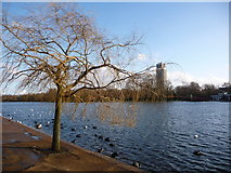 TQ2780 : London: a tree alongside The Serpentine by Chris Downer