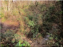 SX4561 : Stream, Warleigh Wood by Derek Harper