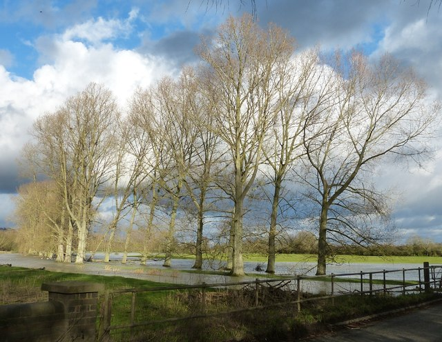 Avenue of trees beside the River Thame