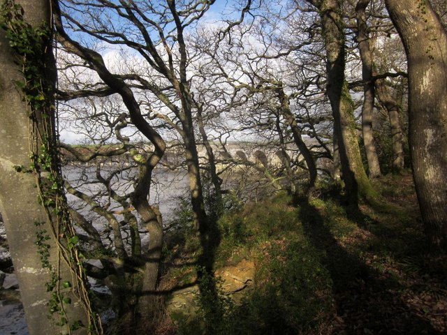 Warleigh Wood