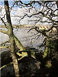 SX4561 : Above the Tavy estuary by Derek Harper