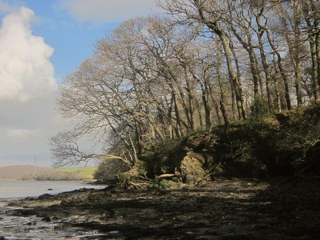 Edge of Warleigh Wood