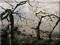SX4461 : Branches above the Tavy by Derek Harper