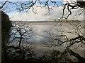 SX4461 : Tavy estuary from Warleigh Wood by Derek Harper
