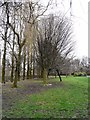 SJ8995 : Trees in Debdale Park by Gerald England