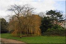 TQ3473 : Trees in Dulwich Park by Bill Boaden