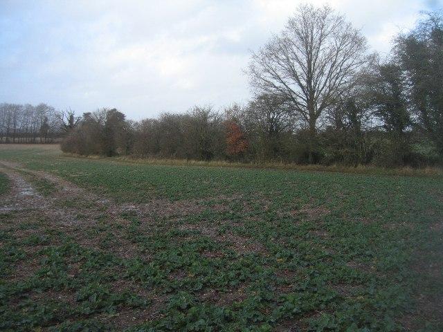 Drab winter farmland by Sandy B