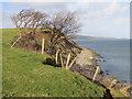 SH6076 : Eroded cliff edge north of Beaumaris by John S Turner