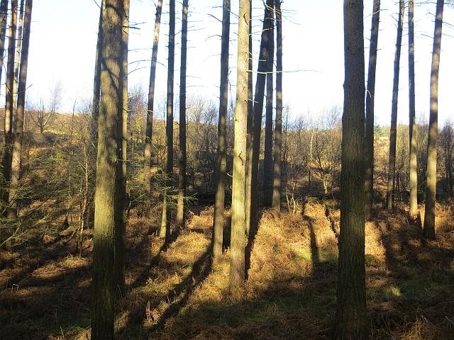 Woodland, Pottal Slade