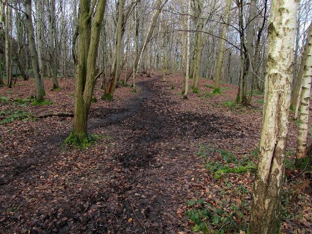 Path in Dawson Wood