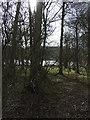 TL1118 : Woodland towards lake by JThomas