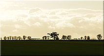 SU4955 : Tree line and clouds from the Wayfarer's Walk, near Watership Down, Hampshire by Edmund Shaw