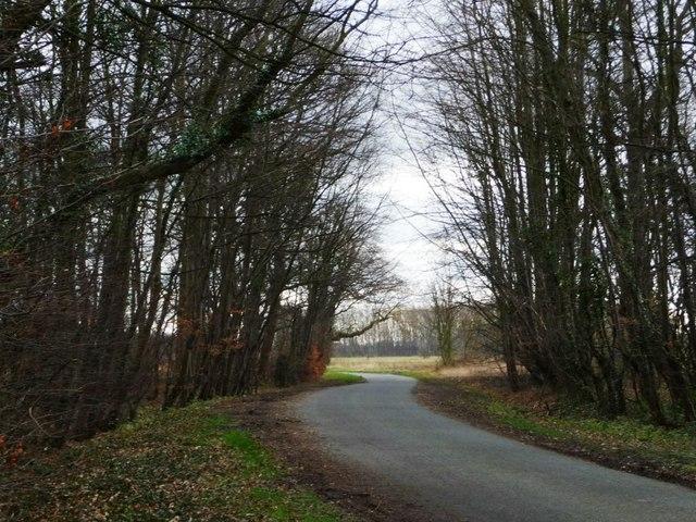 Highfield Lane at Grove Wood