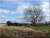 TF1020 : Looking across Car Dyke on the edge of Bourne by Marathon