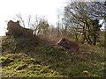 TL9838 : Oak tree stump near Homey Bridge Lane junction by Hamish Griffin