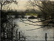 SO8625 : Two mallards on the flood by Jonathan Billinger