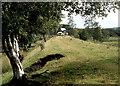 NY7486 : Old railway embankment at Donkleywood by Alan Reid