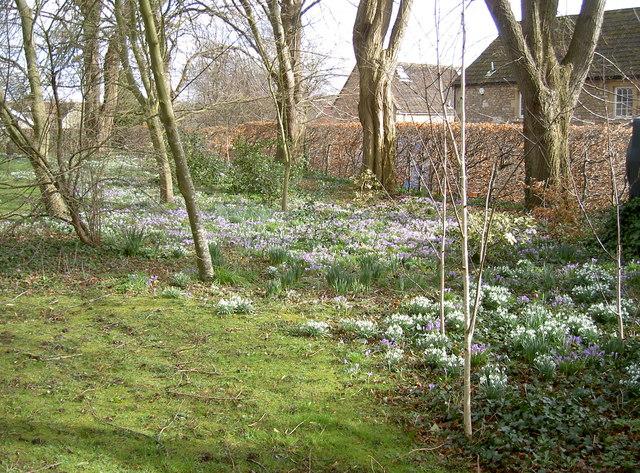A carpet of Spring flowers