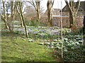 ST7358 : A carpet of Spring flowers by Neil Owen