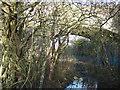 TL5765 : Reach Bridge - An old railway bridge near Swaffham Prior by Richard Humphrey